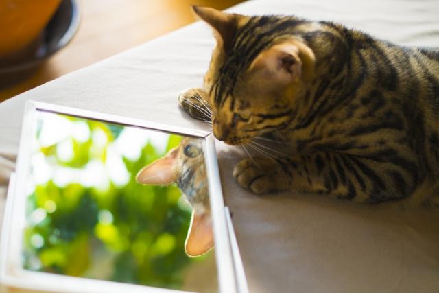 鏡の中の自分に思わずウィンクしたくなる♪
